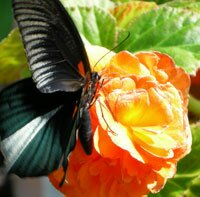 Бабочки для блоггера